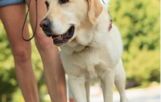 Service Dogs for Vestibular Disorder-